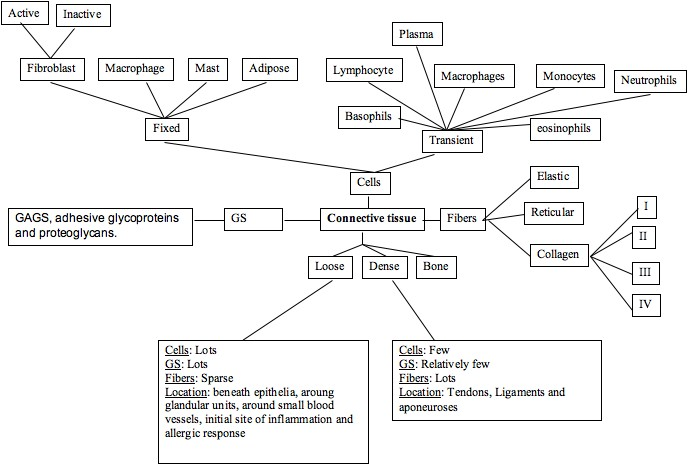 Rosswiki2008 Connective Tissue Concept Map